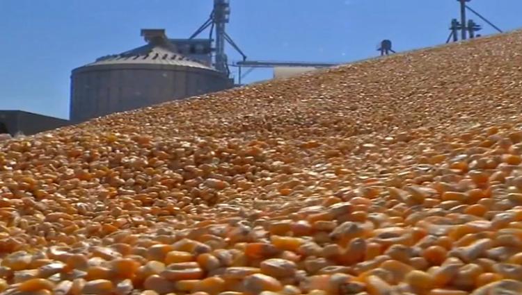 Conab transportará 16 mil toneladas de milho de Mato Grosso para outras regiões